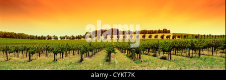 Winery in the Barossa Valley - Stock Photo