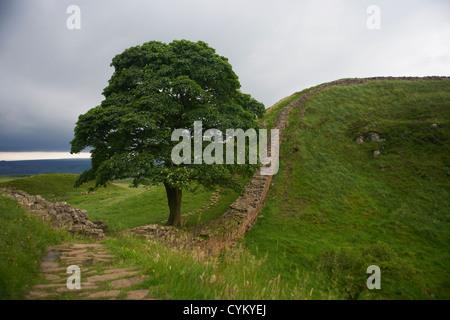 Stone walls in rural field - Stock Photo