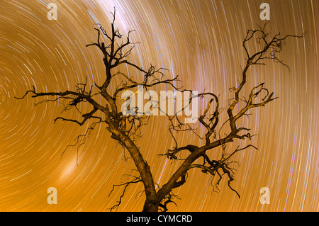 Ghostly tree under star trails. - Stock Photo
