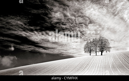 A sunny,snowy,winter abstract, minimalist monochrome landscape view or scene on the Downs in Wiltshire, England, - Stock Photo