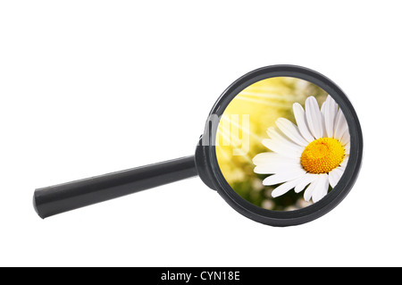 finde a flower or nature with a magnifying glass - Stock Photo