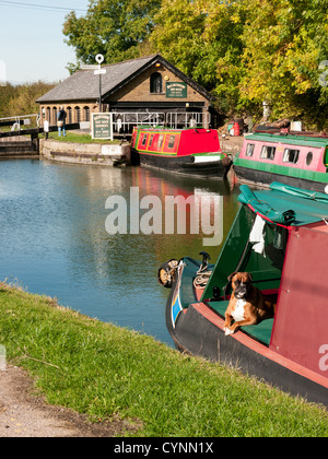 Narrow boats at Bulbourne dry dock and DIY hire on the Grand Union Canal at Marsworth, Bucks UK with a brown and - Stock Photo