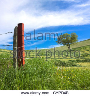 Fence and tree in a mowed field, Limagne, Auvergne, France, Europe - Stock Photo