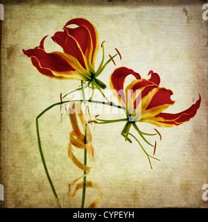 Decorative orchid - Stock Photo