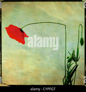 Dying flowers - Stock Photo
