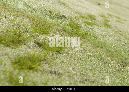 The green grassland with deep step road. - Stock Photo