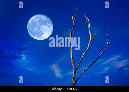 A Full Moon On The Rise Against A Deep Blue Twilight Sky With Wispy Clouds And A Leafless Tree, This Is A Digital - Stock Photo