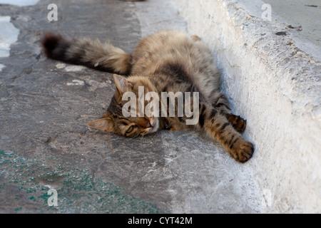Street tabby cat lies on the асфольте and sleeps - Stock Photo
