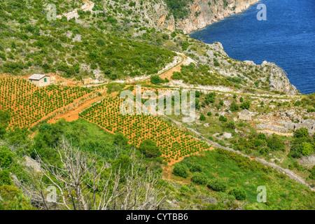 Vineyards, southern coast of Hvar, Croatia - Stock Photo