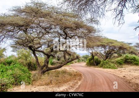 LAKE MANYARA NATIONAL PARK, Tanzania - A dirt road winds through the acacia trees at Lake Manyara National Park - Stock Photo