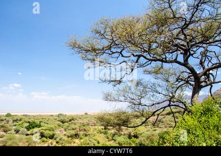 LAKE MANYARA NATIONAL PARK, Tanzania - A partly elevated view of Lake Manyara National Park, with a tree in the - Stock Photo