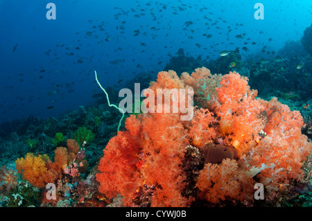 Reef scenic with soft corals Komodo Indonesia. - Stock Photo