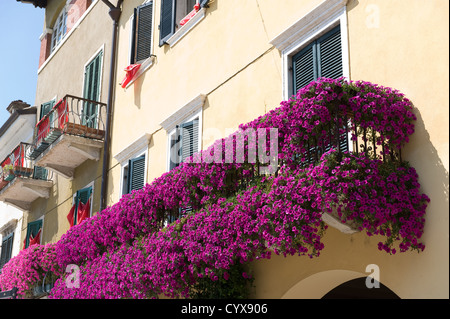 A lot of flowers on a balcony at the town of Lazise at Lake Garda in Italy. - Stock Photo