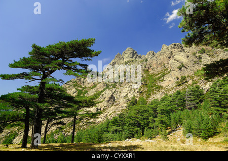 les aiguilles de bavella et pin lariccio corse du sud France 2A - Stock Photo