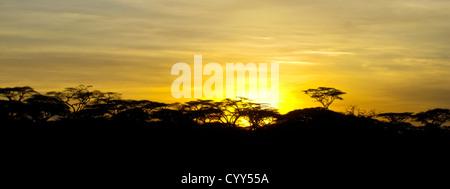 A brilliant sunrise over the acacia trees in the Serengeti National Park, Tanznia - Stock Photo