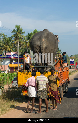 Elephant being transported on a truck near Alappuzha (Alleppey), Kerala, India - Stock Photo