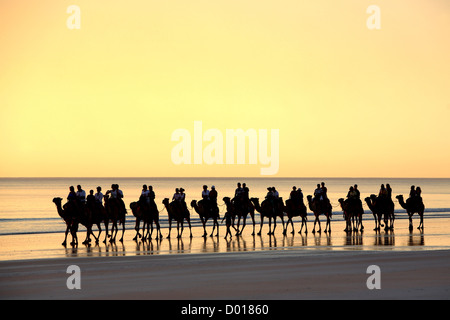 Sunset Camel Tour at Cable Beach. Broome, Western Australia.