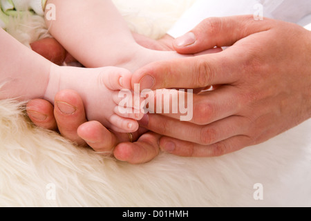 Baby's Feet in Father's Palms over white fur - Stock Photo