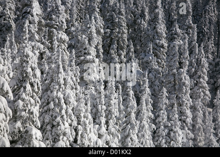 WA06331-00...WASHINGTON - Snow covered trees after a winter storm on Hurricane Ridge in Olympic National Park. - Stock Photo