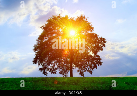 An isolated tree with sunlight effect. - Stock Photo