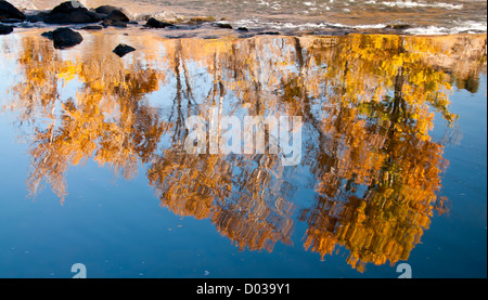 Scenic with autumn water reflections of cottonwood trees in the Boise River along the Boise River Greenbelt. Boise, - Stock Photo