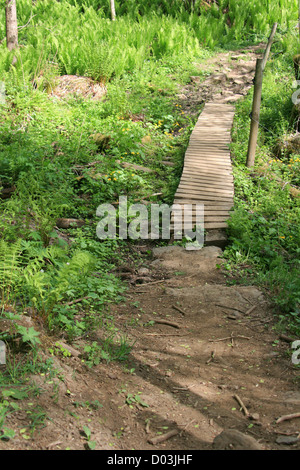 Path in the forrest. - Stock Photo