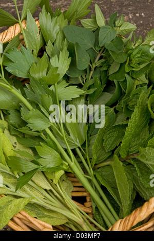 A mixture of fresh organically grown garden herbs - Stock Photo
