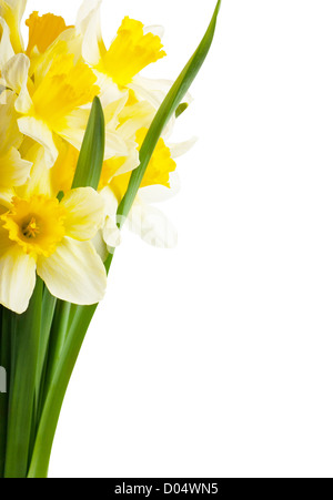 A bouquet of narcissuses isolated over white - Stock Photo