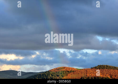 Aberystwyth, Wales. 17th November 2012. After an afternoon of showers, a rainbow appears above forest land on the - Stock Photo