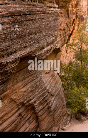 Hidden Canyon, a narrow canyon off Zion Canyon in Navajo sandstone; Zion National Park, Utah, USA - Stock Photo