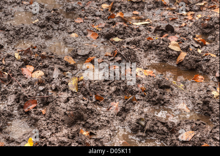 muddy squelchy sloppy trail created by horses through dense beech thicket footpath in mist and autumn colors - Stock Photo