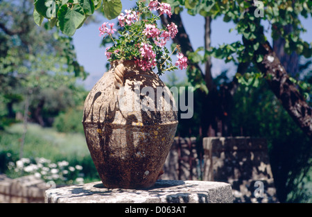 Close Up View of a Potted Flower in a Garden, Villa Cimbrone, Ravello, Campania, Italy - Stock Photo