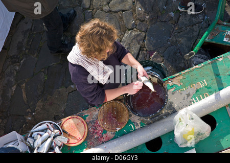 Preparing fish, Devon, UK - Stock Photo