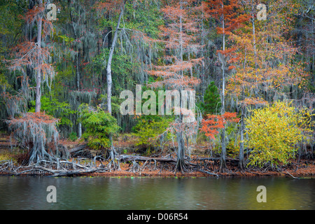 Trees in fall color at Caddo Lake State Park, Texas - Stock Photo