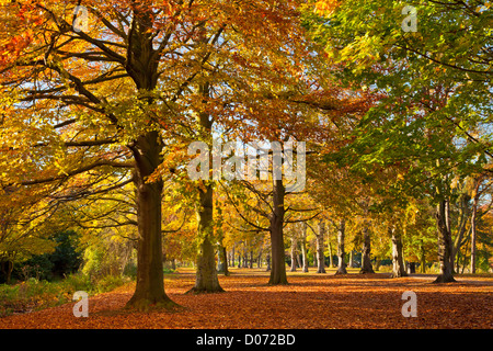 Autumn leaves on the ground  with Autumn Tree Colours, University Park, Nottingham, England, UK, GB ,Europe - Stock Photo