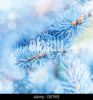 Photo of frozen fir tree background, branches of evergreen tree covered rime, twigs of spruce covered by hoar in - Stock Photo