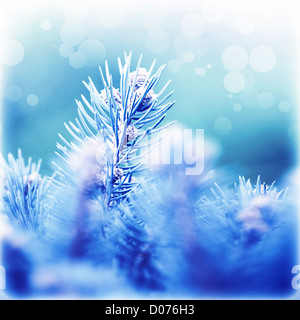 Picture of abstract fir tree background, beautiful coniferous branches covered with blue rime, Christmas greeting - Stock Photo