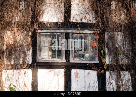 A window of a medieval half timbered house overgrown with Ivy, Staick House, Eardisland Herefordshire UK - Stock Photo