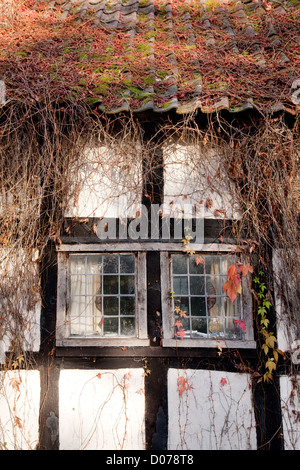 Old window of a medieval half timbered house overgrown with Ivy, Staick House, Eardisland Herefordshire UK - Stock Photo