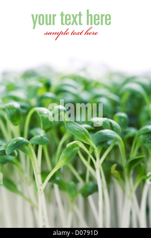 nutritious sprouts full of antioxidants and vitamin c (with sample text) - Stock Photo