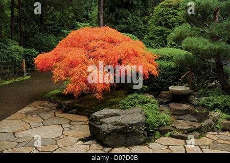Japanese Maple in Autumn, Portland Japanese Garden, Portland, Oregon, USA - Stock Photo