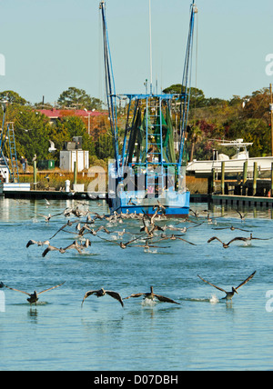 USA, Charleston, South Carolina. A shrimp boat draws the pelicans at Shem Creek Marina in Mt. Pleasant near Charleston. - Stock Photo