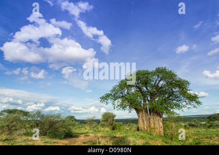 Tarangire National Park. Tanzania Africa - Stock Photo