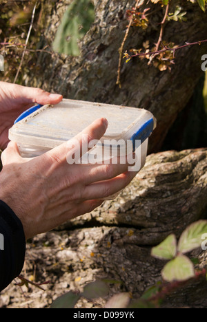 Finding a geocache box, Sheffield, South Yorkshire, England. - Stock Photo