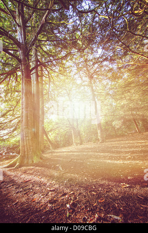 forest light - Stock Photo