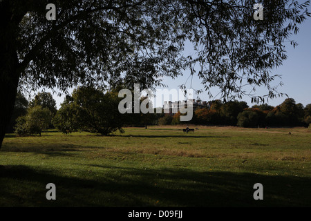 A pedestrian takes a rest on London's Hampstead Heath on a late English summer day; view from the east looking towards - Stock Photo
