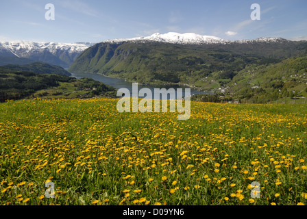 A view at the Hardanger fjord and surrounding mountains(Hardangervidda National park) from the village Ulvik in - Stock Photo