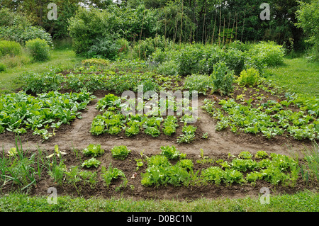 A traditional vegetable garden, vegetable beds of carrots, lettuces, spinach, cabbage, potatoe, broad beans... - Stock Photo