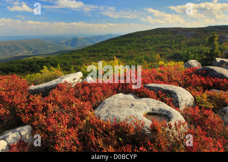Bear Rocks Preserve, Dolly Sods Wilderness, Hopeville, West Virginia, USA - Stock Photo