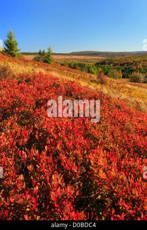 Bear Rocks Trail, Dolly Sods Wilderness, Hopeville, West Virginia, USA - Stock Photo